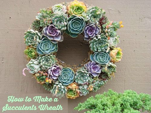 succulents wreath idea