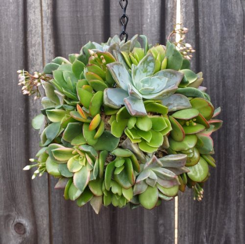 succulents ball hanger