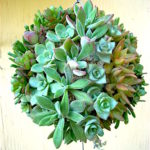 How to Make a Topiary Succulents Ball
